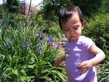 gardenflowerblog.jpg
