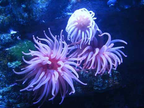 anemonesblog.jpg