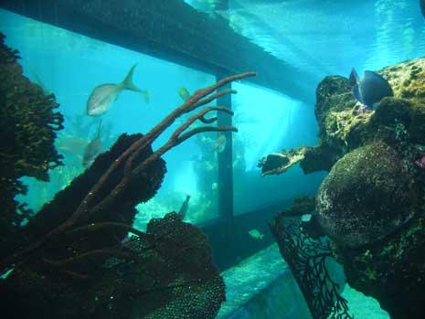 fishtankblog.jpg