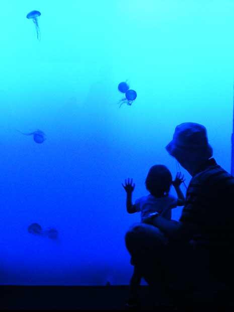 siennajellyfishtankblog.jpg
