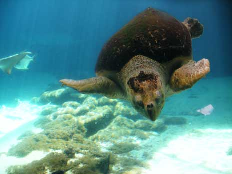 turtleblog.jpg