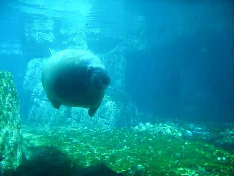 walrusblog.jpg