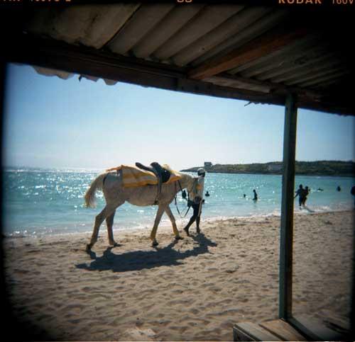 beach-horse-dkblog.jpg