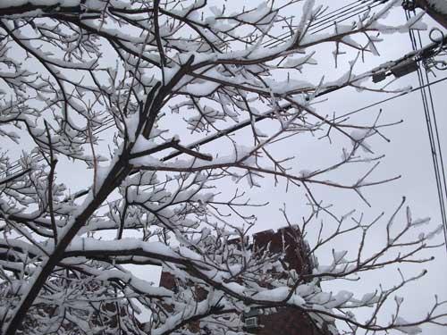 snowbranches.jpg