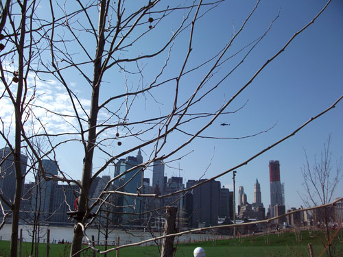 citytreeview.jpg
