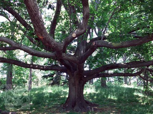 branchful.jpg