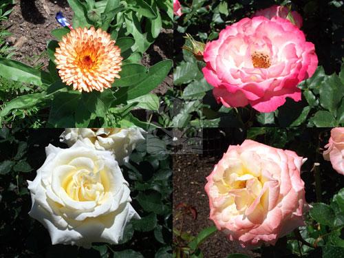 flowersbbg.jpg
