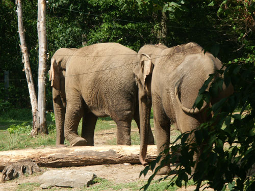 elephantbutts.jpg