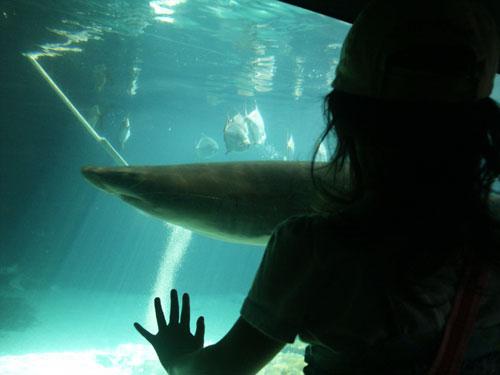sharksilh.jpg