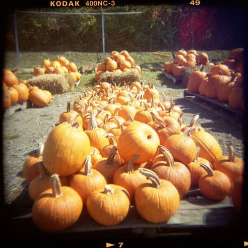 pumpkinsrf.jpg