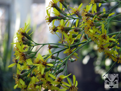 yellowgreenflowers.jpg