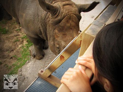rhinotruck.jpg