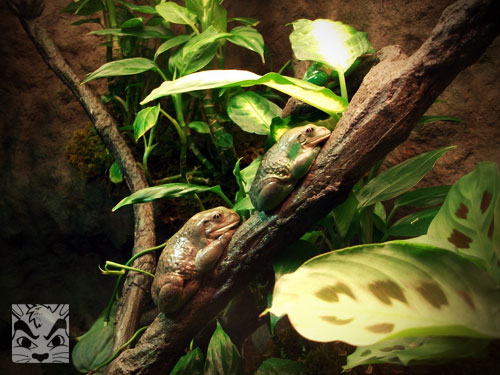 Frogs at AMNH