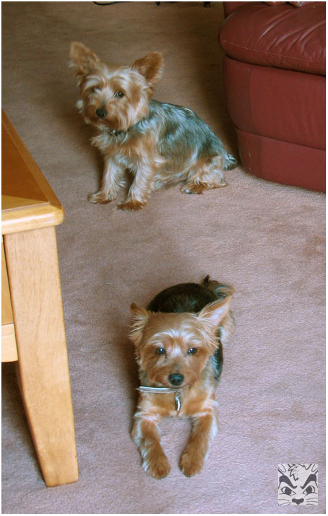 Skippy and his daughter Rozie (who also passed) probably in 2007.
