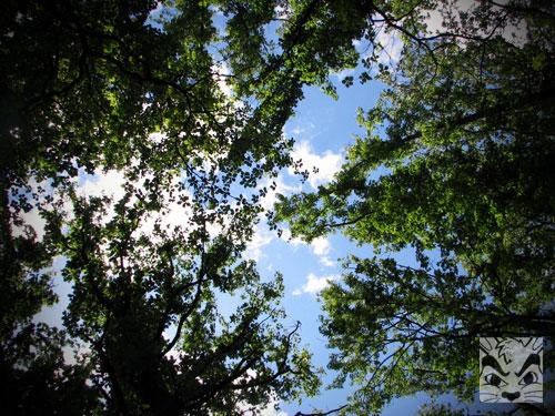 WolfesPondTrees